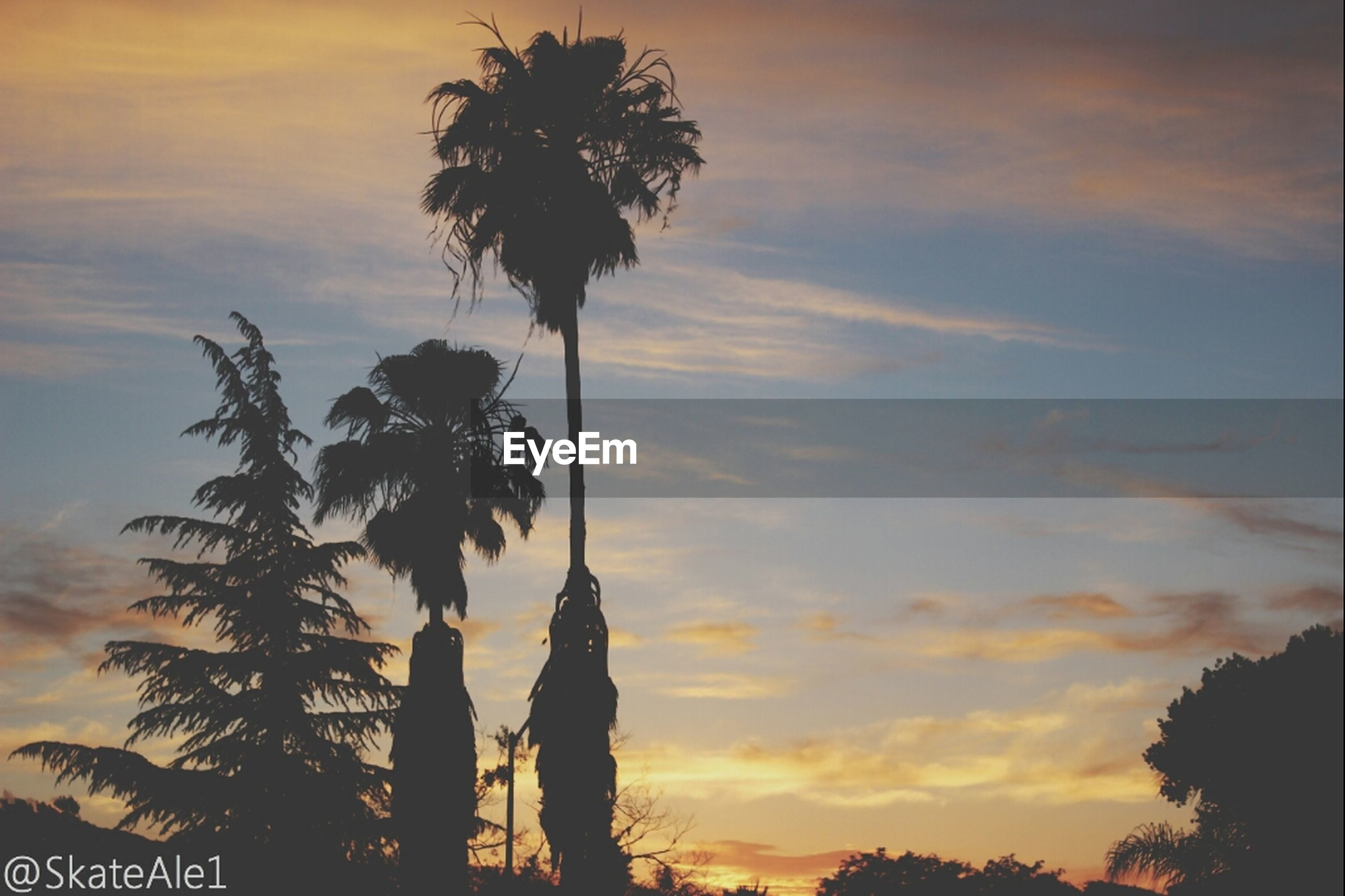 sunset, silhouette, palm tree, tree, sky, low angle view, tranquility, cloud - sky, beauty in nature, orange color, scenics, nature, tree trunk, tranquil scene, growth, cloud, cloudy, dusk, dramatic sky, no people