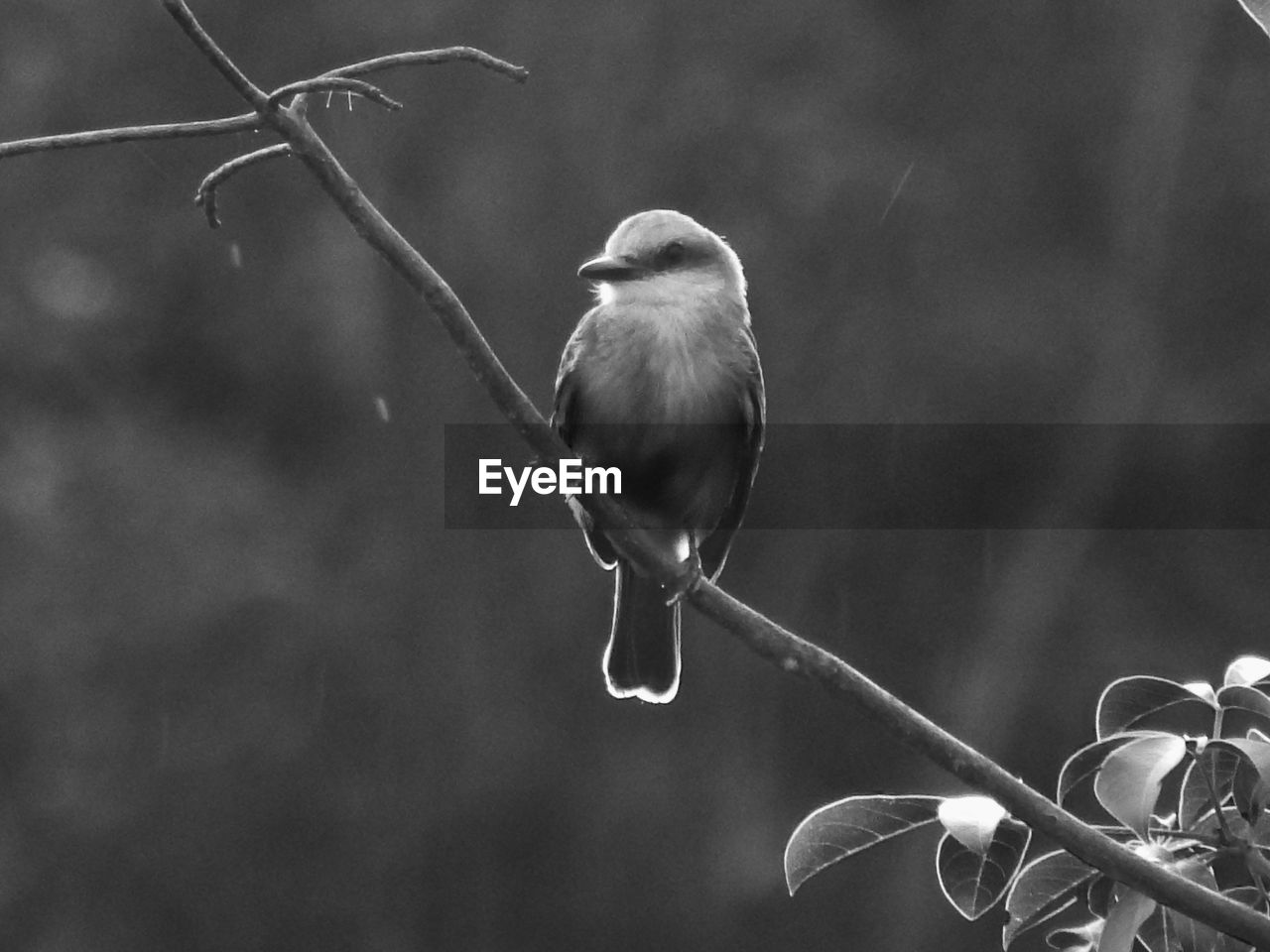 focus on foreground, outdoors, day, plant, close-up, nature, no people, bird, growth, animal themes, fragility, beauty in nature