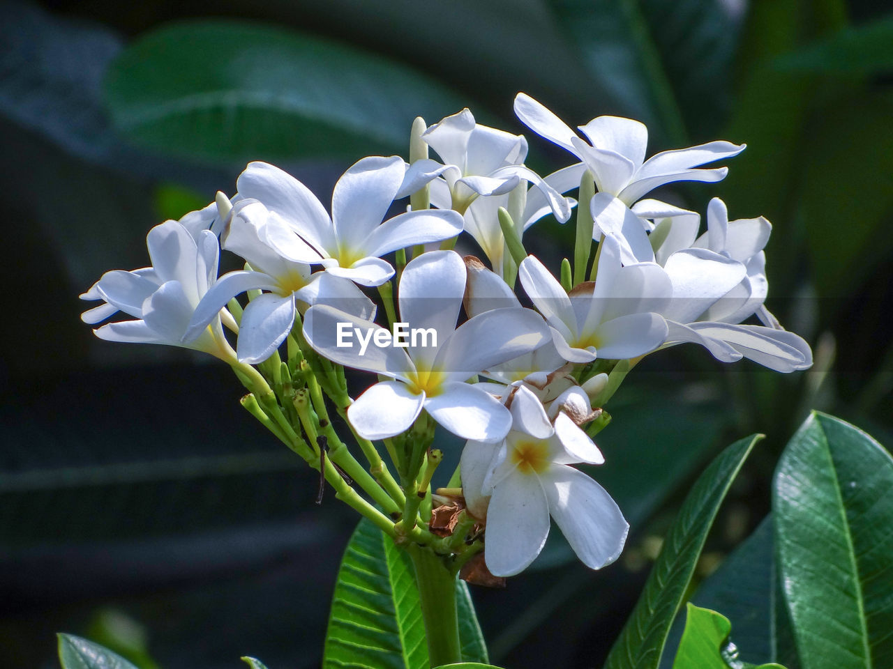 flowering plant, flower, plant, vulnerability, beauty in nature, petal, fragility, freshness, growth, close-up, inflorescence, flower head, plant part, white color, leaf, focus on foreground, nature, day, no people, botany, outdoors