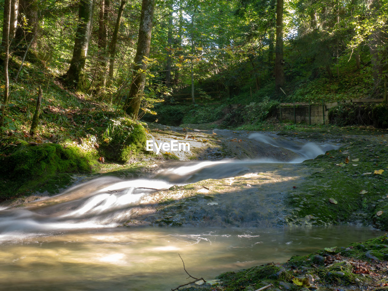 tree, forest, plant, water, land, beauty in nature, motion, nature, no people, scenics - nature, flowing water, flowing, growth, blurred motion, long exposure, day, waterfall, environment, outdoors, woodland, power in nature