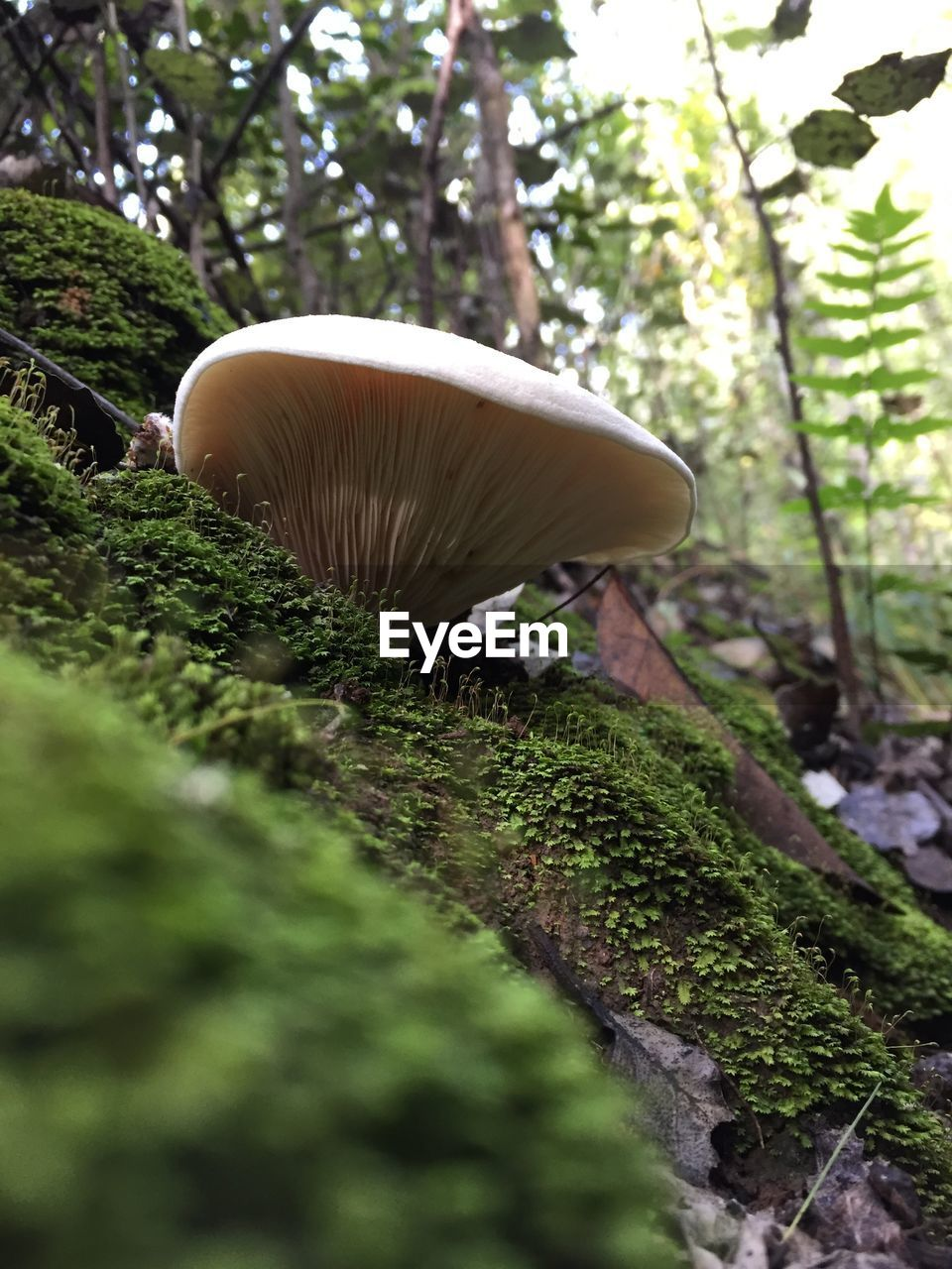 plant, mushroom, tree, fungus, growth, toadstool, vegetable, nature, no people, day, selective focus, land, food, close-up, edible mushroom, forest, green color, beauty in nature, moss, field, outdoors, surface level