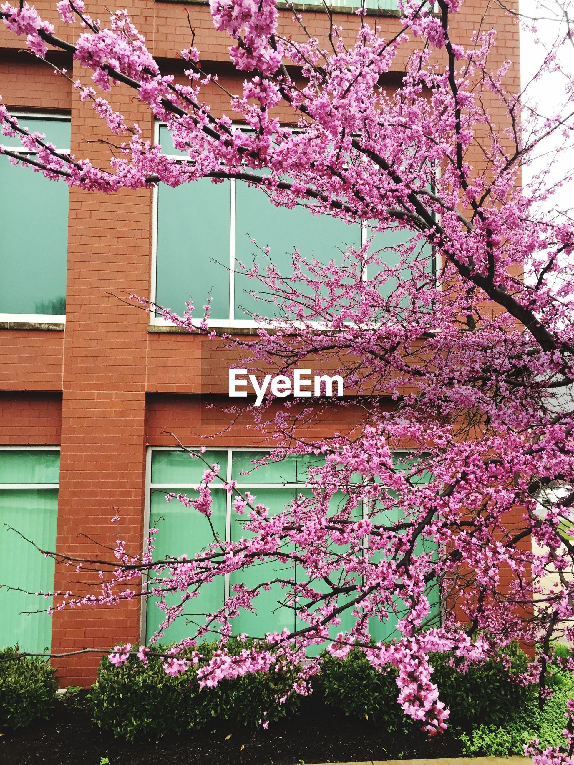 Tree in bloom against building