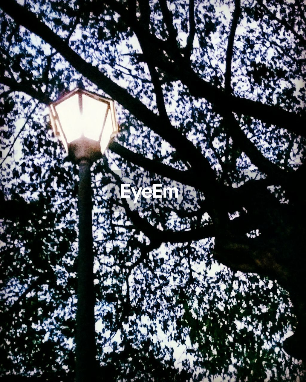 tree, low angle view, growth, branch, lighting equipment, no people, built structure, nature, architecture, illuminated, day, outdoors, beauty in nature, sky, close-up