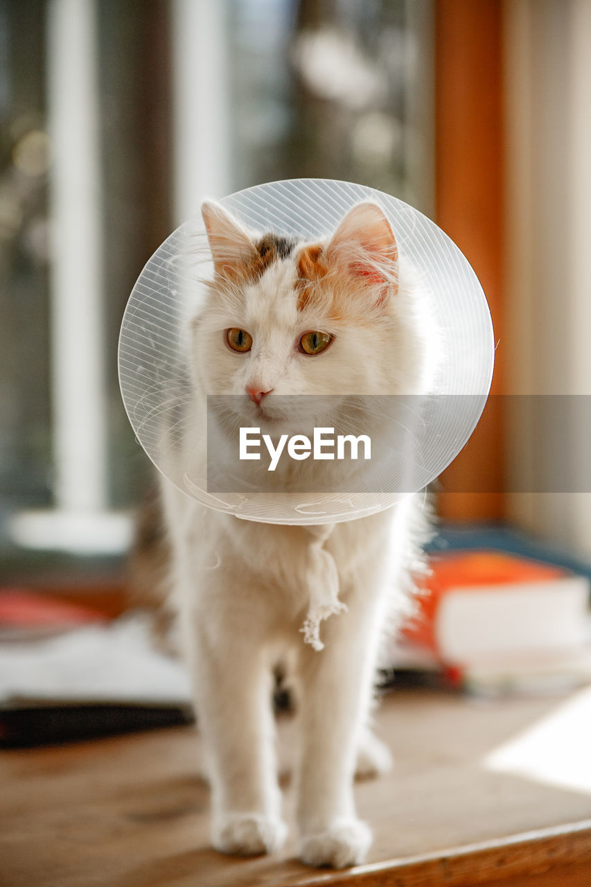 Close-Up Of Cat Wearing Protective Collar On Table