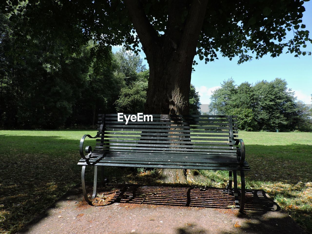 bench, tree, park - man made space, absence, tranquility, nature, growth, day, landscape, no people, seat, grass, beauty in nature, relaxation, outdoors, past