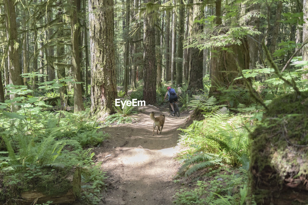 Rear view of man cycling in forest with dog