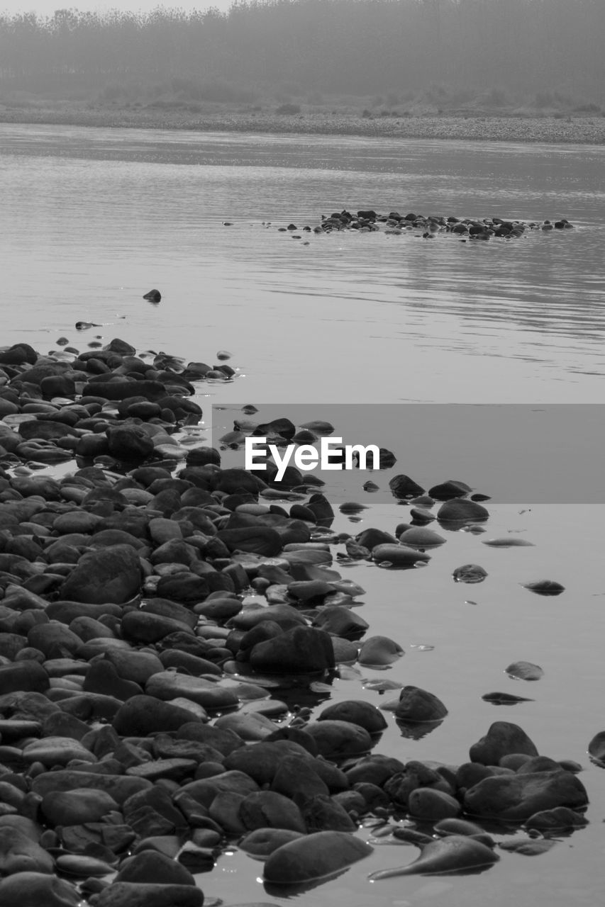 water, no people, nature, pebble, day, beach, outdoors, beauty in nature, sea, pebble beach, animal themes