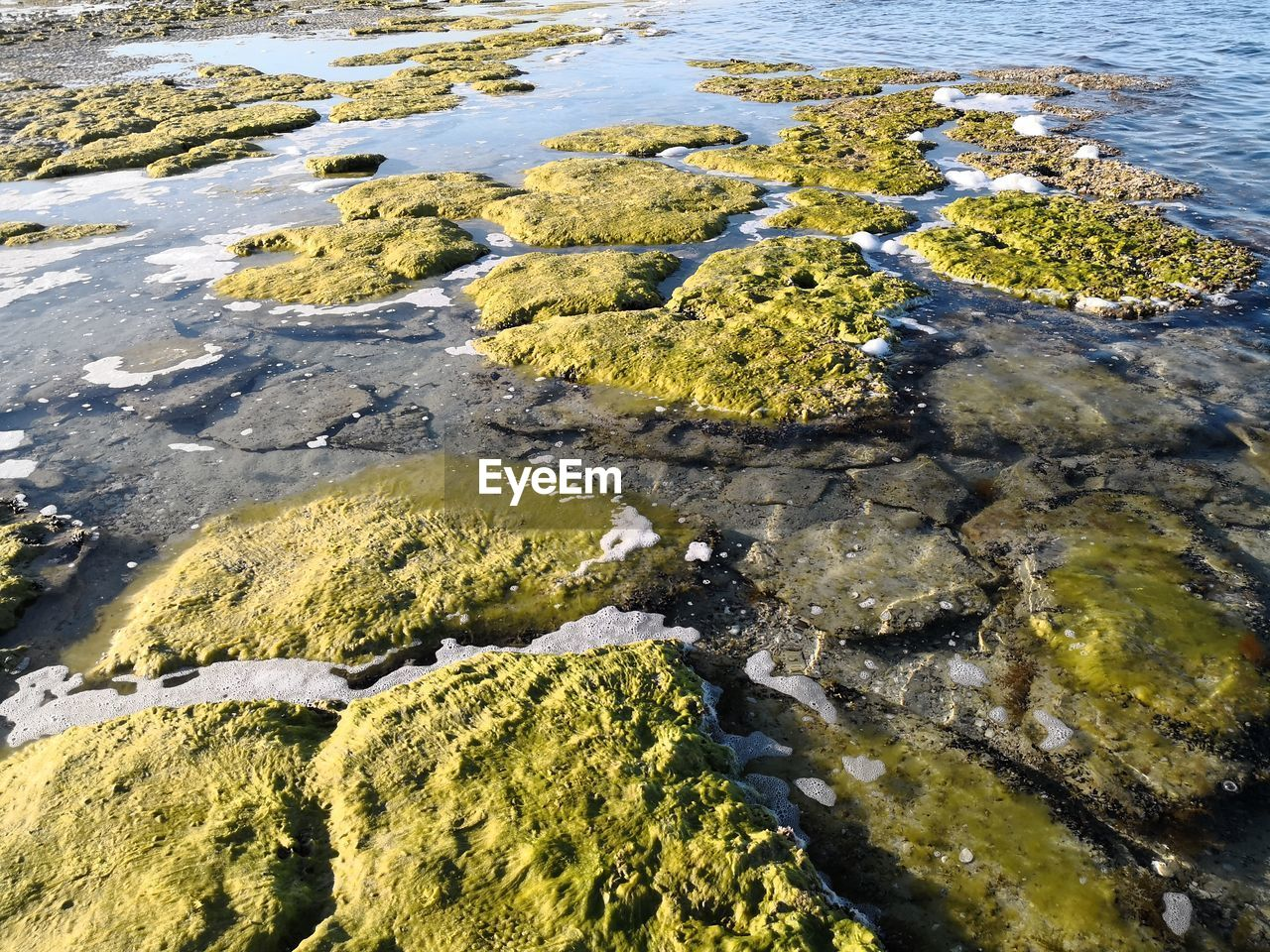 water, nature, algae, day, high angle view, no people, beach, outdoors, moss, rock - object, beauty in nature, tranquility, shallow, sea, close-up, pebble beach
