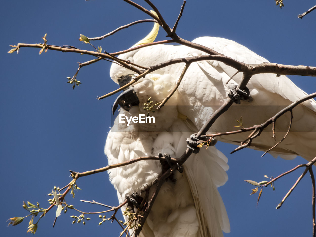 sky, animal themes, low angle view, animal, one animal, animal wildlife, no people, branch, vertebrate, nature, tree, plant, day, animals in the wild, sunlight, clear sky, bird, white color, close-up, outdoors, animal head, herbivorous