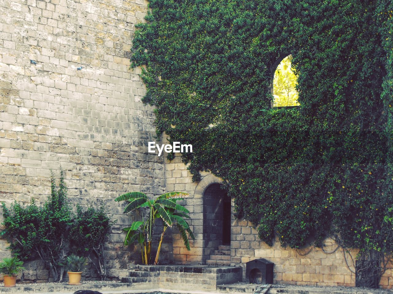 architecture, plant, growth, tree, built structure, outdoors, day, building exterior, no people, ivy, nature, city