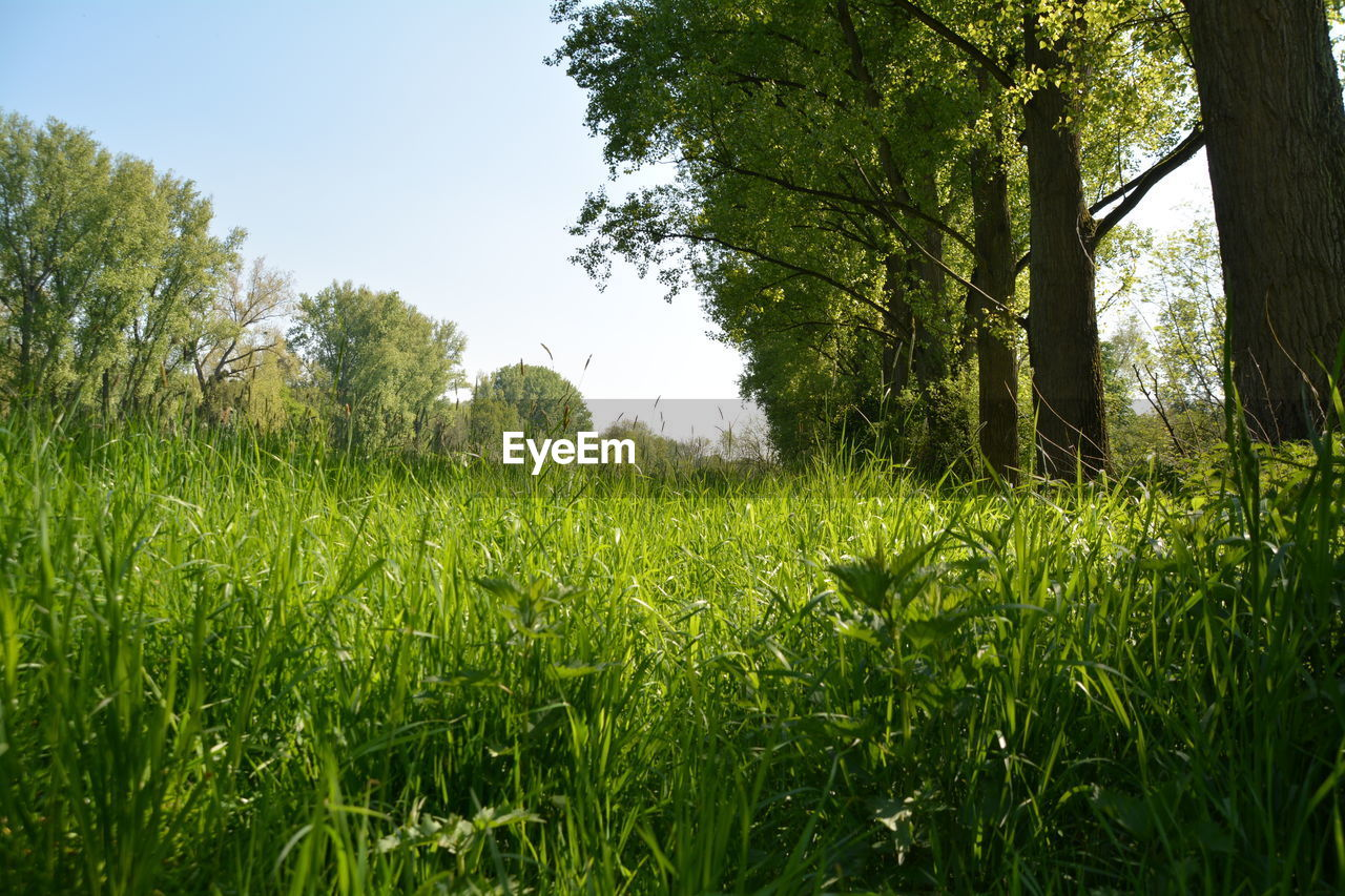 grass, growth, nature, tree, green, field, summer, forest, no people, outdoors, day