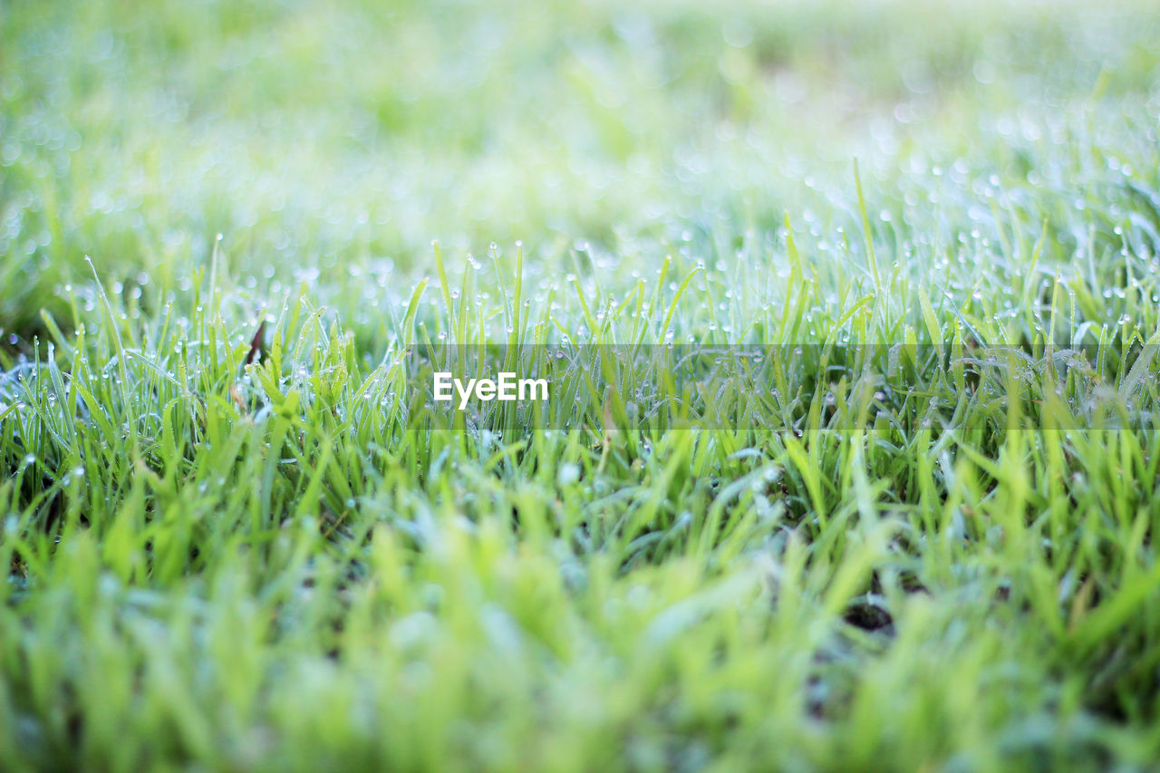 Full Frame Shot Of Grass On Field