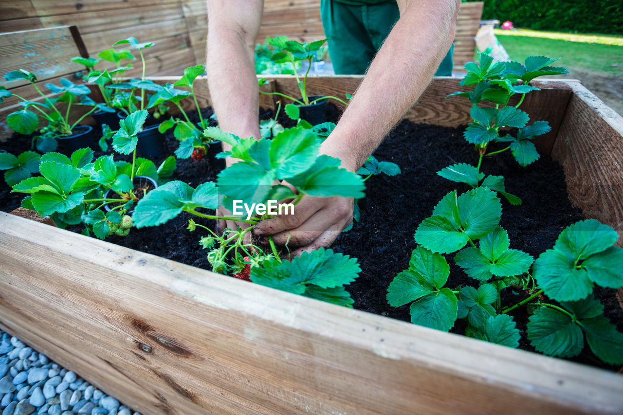 Cropped Hands Planting Crops At Vegetable Garden