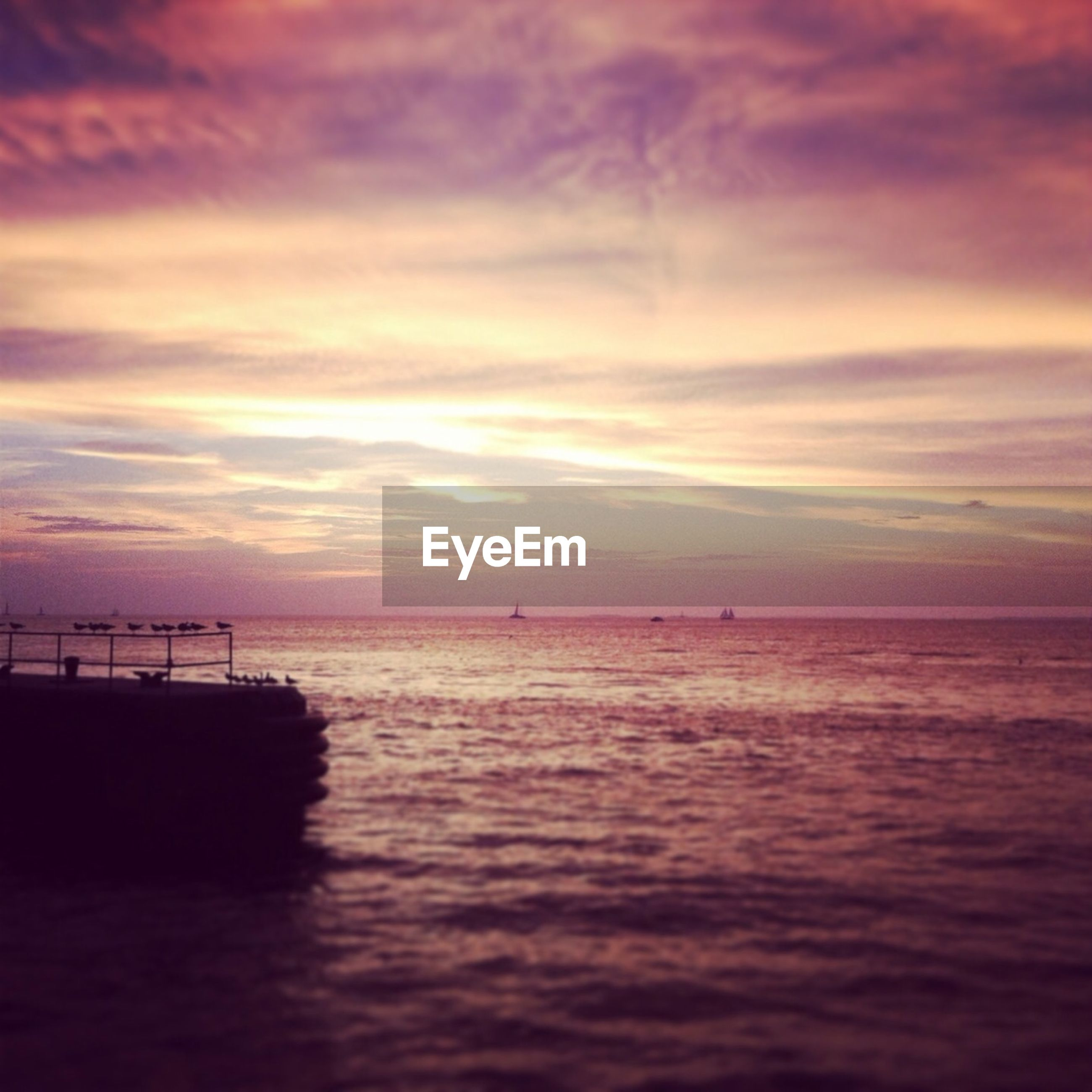 Birds at pier at sunset