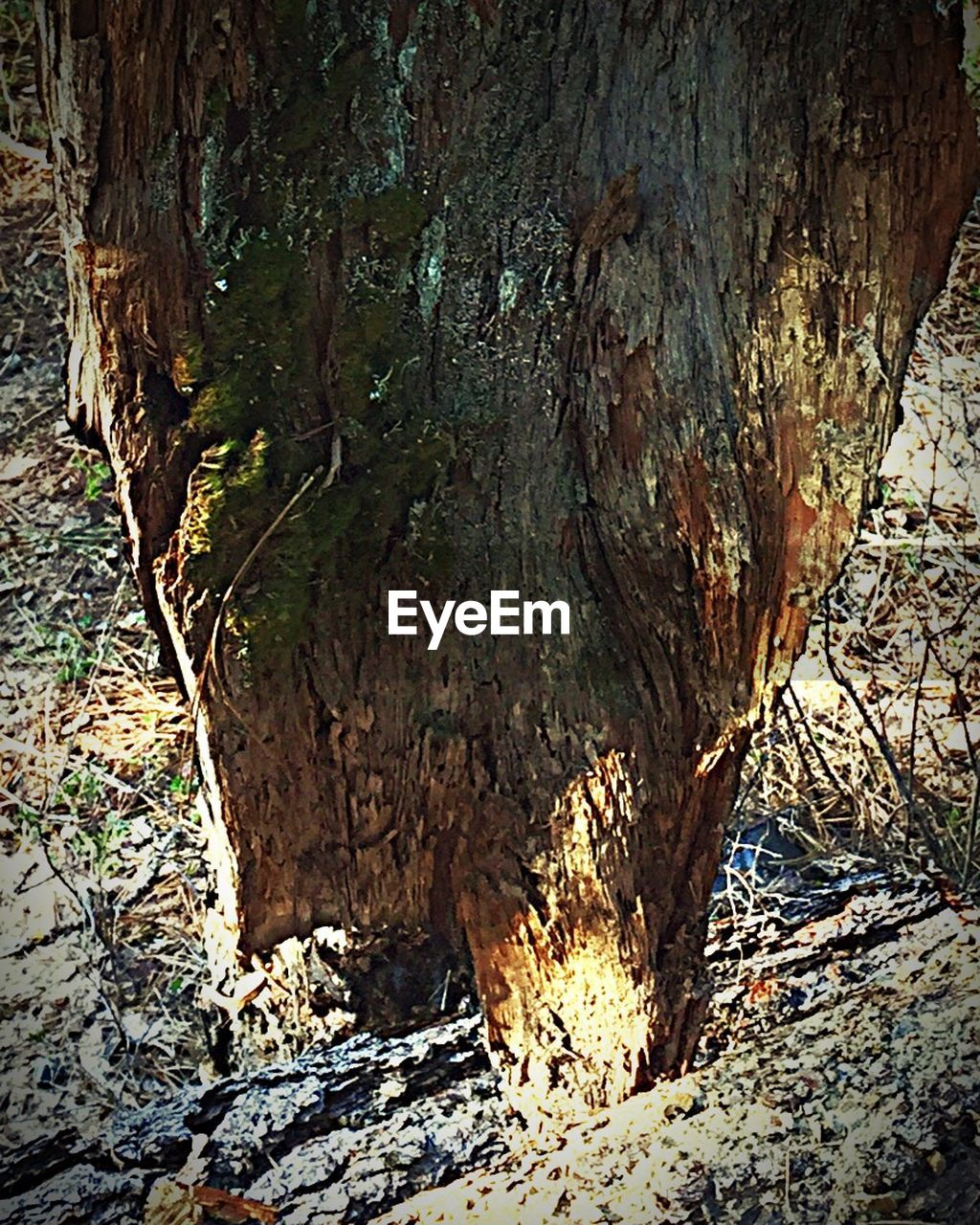 nature, tree, tree trunk, rock - object, day, no people, beauty in nature, tranquility, textured, outdoors, forest, close-up