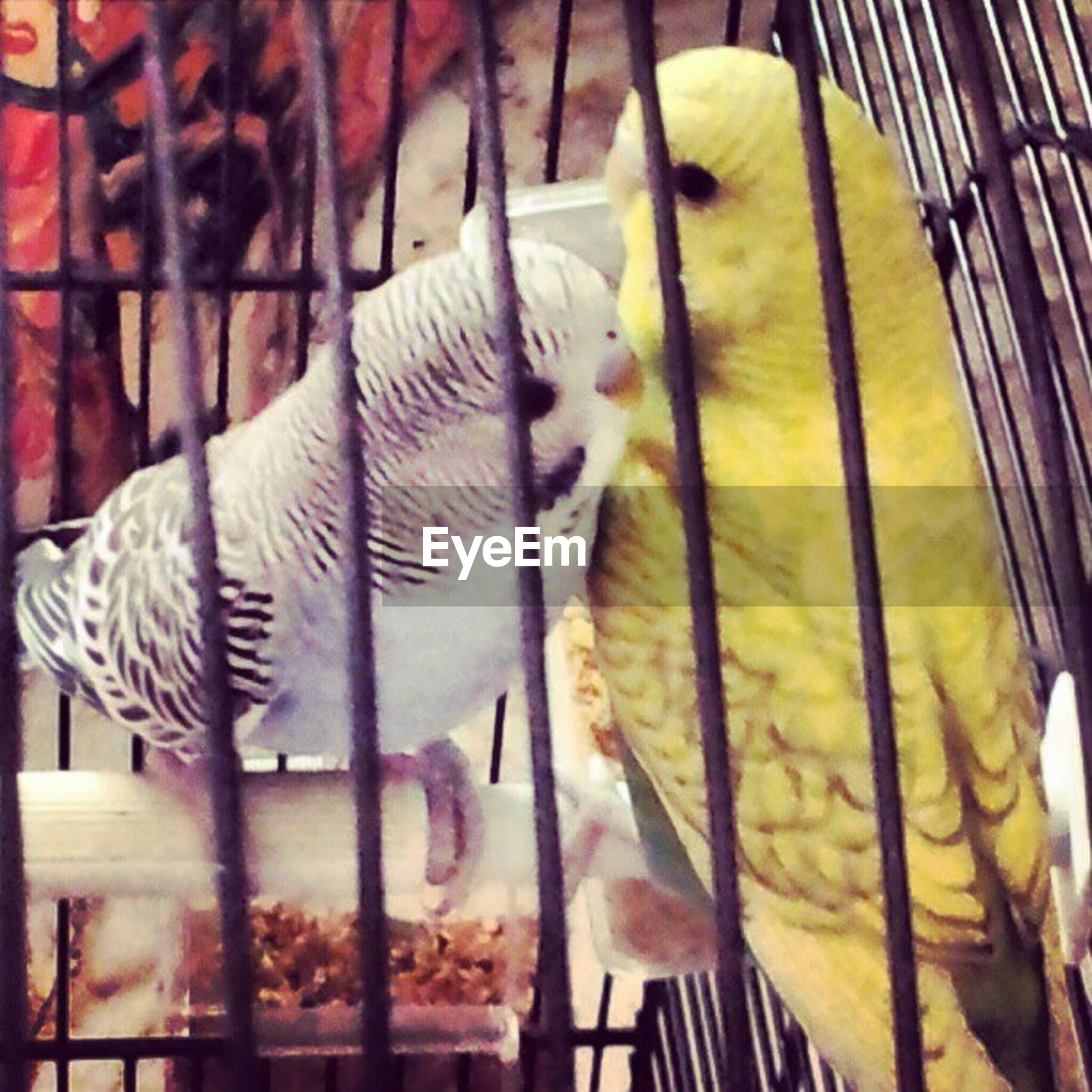 animal themes, cage, indoors, metal, no people, close-up, hanging, focus on foreground, one animal, domestic animals, day, in a row, bird, railing, fence, mammal, wood - material, domestic cat, pattern, birdcage