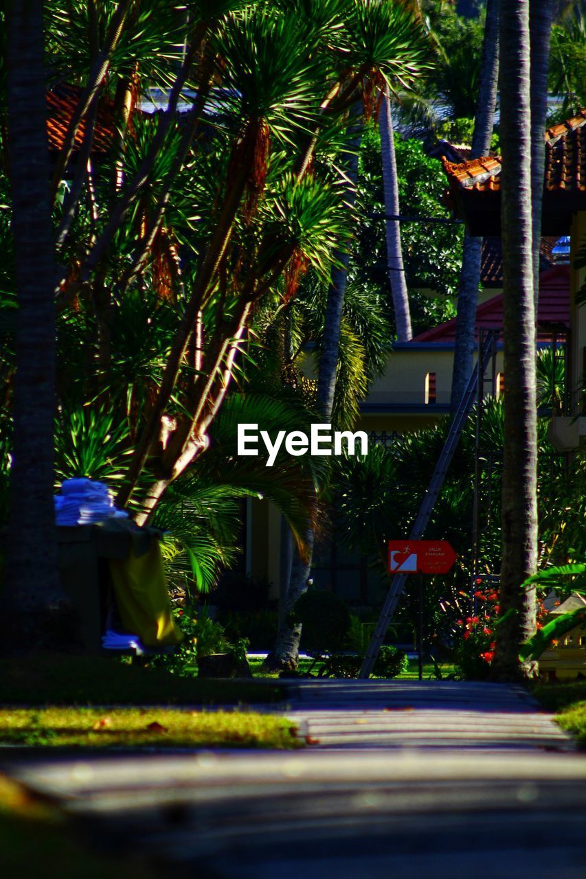 plant, tree, nature, growth, architecture, palm tree, city, tropical climate, street, building exterior, real people, outdoors, day, flowering plant, men, flower, built structure, illuminated, walking, road