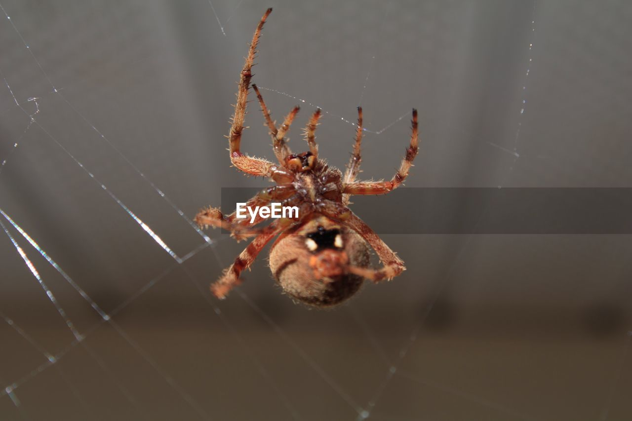 animal themes, spider, spider web, animal, one animal, arachnid, animals in the wild, animal wildlife, invertebrate, arthropod, insect, fragility, close-up, focus on foreground, vulnerability, zoology, no people, nature, selective focus, survival, animal leg, web, outdoors, marine
