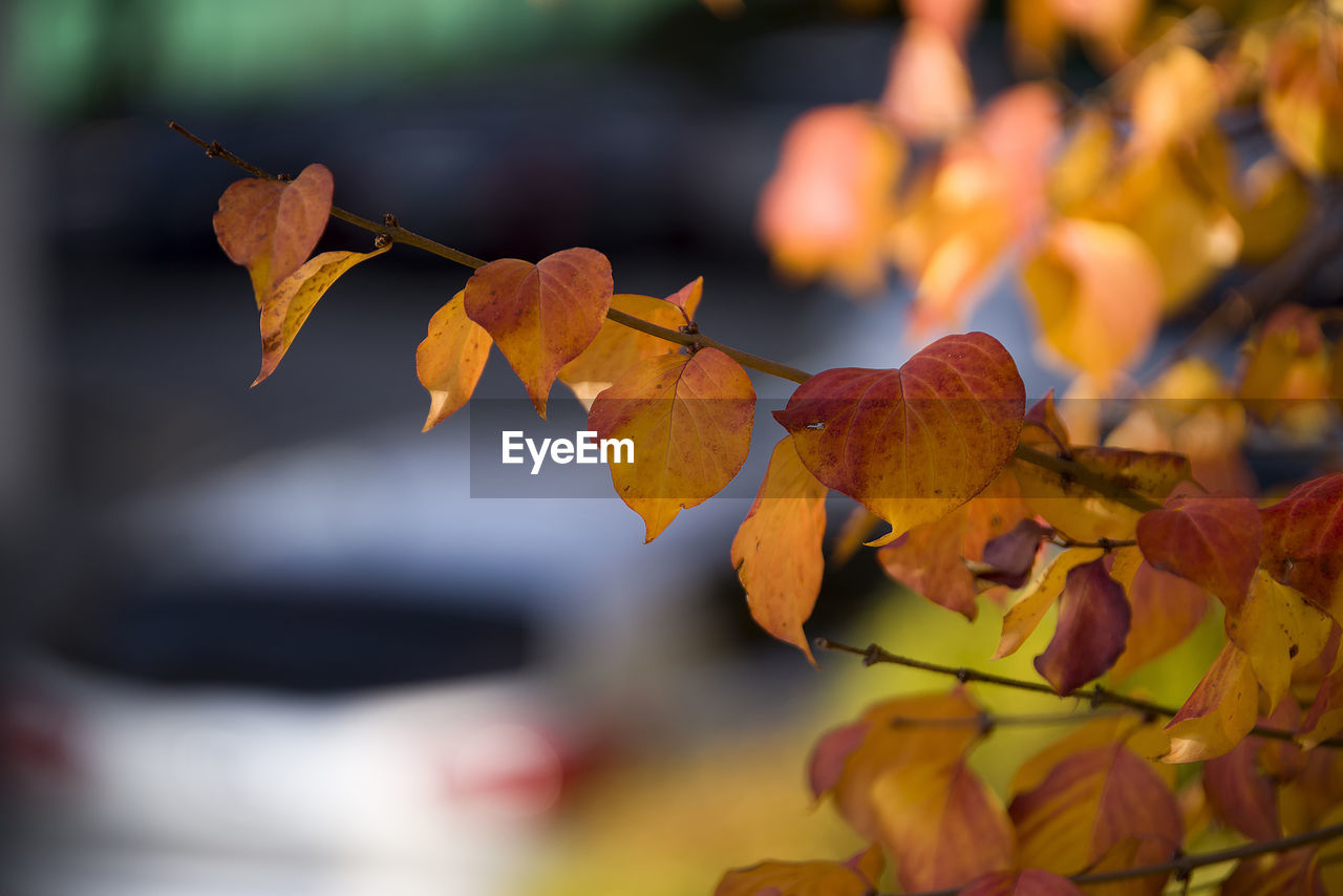 leaf, plant part, autumn, change, plant, close-up, focus on foreground, beauty in nature, orange color, growth, nature, day, no people, leaves, selective focus, vulnerability, outdoors, fragility, tree, yellow, autumn collection, maple leaf, natural condition, fall
