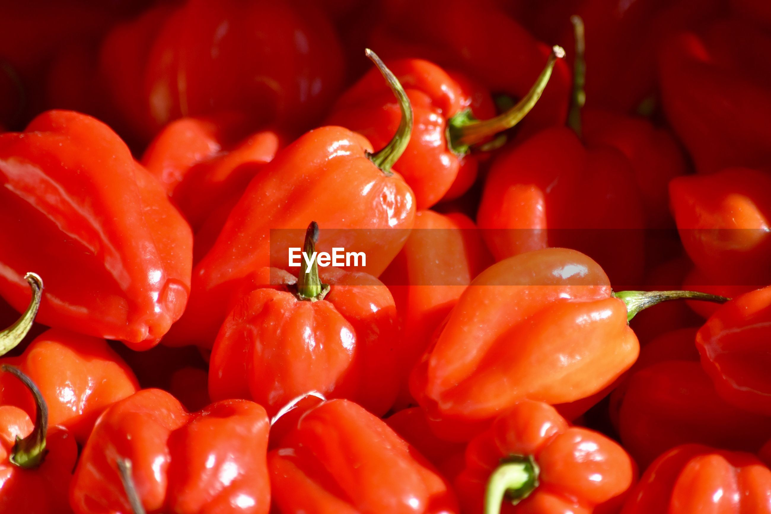 Full frame shot of red chili peppers for sale at market during sunny day
