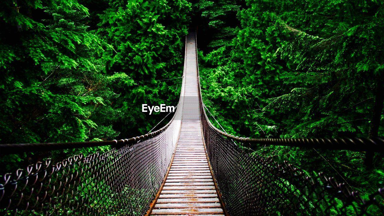 Footbridge Amidst Green Trees