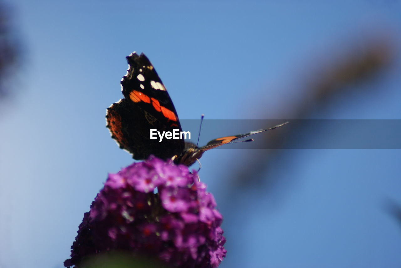 Butterfly Perching On Flower