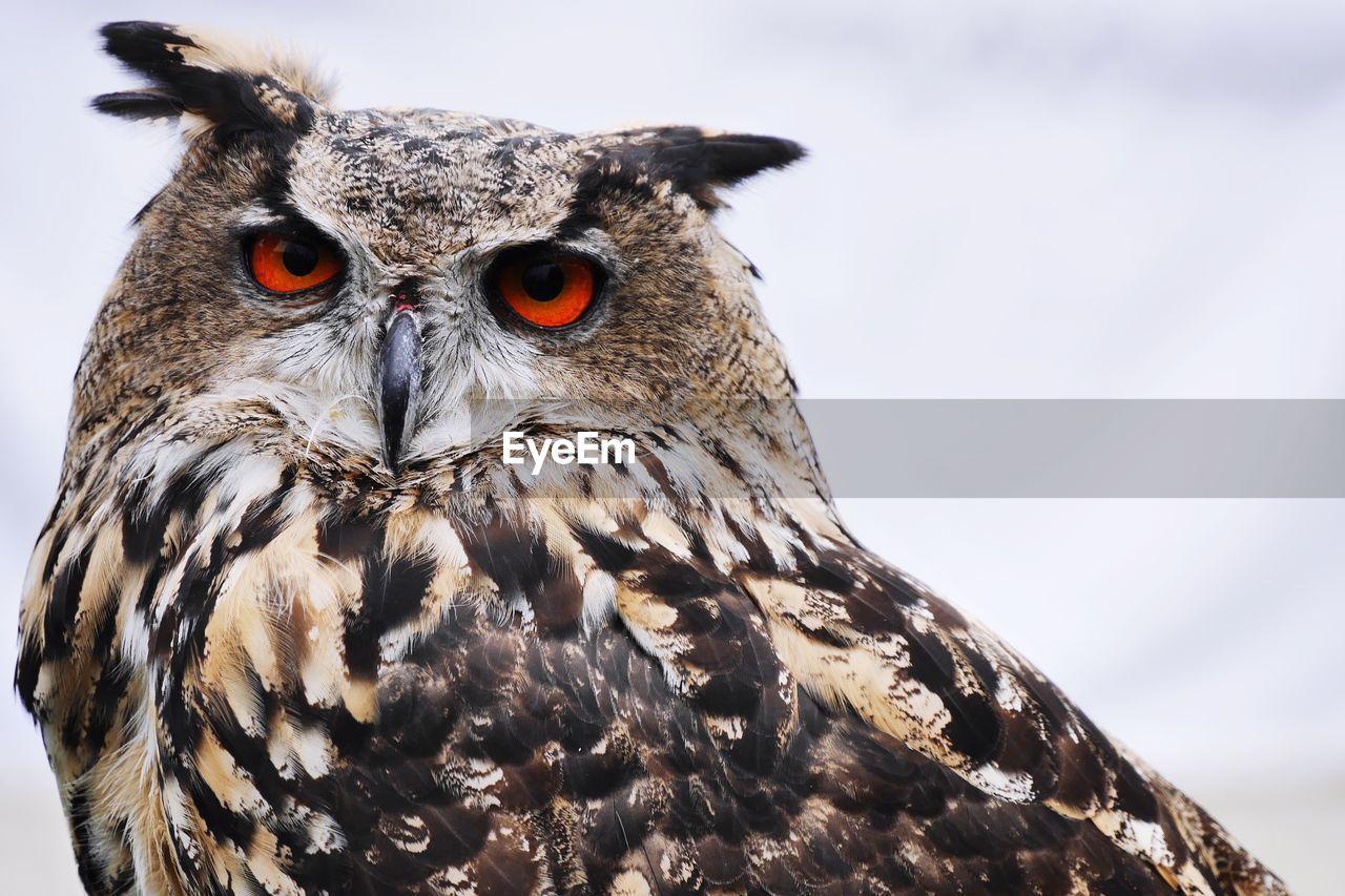 Close-Up Portrait Of Eagle Owl Against Sky