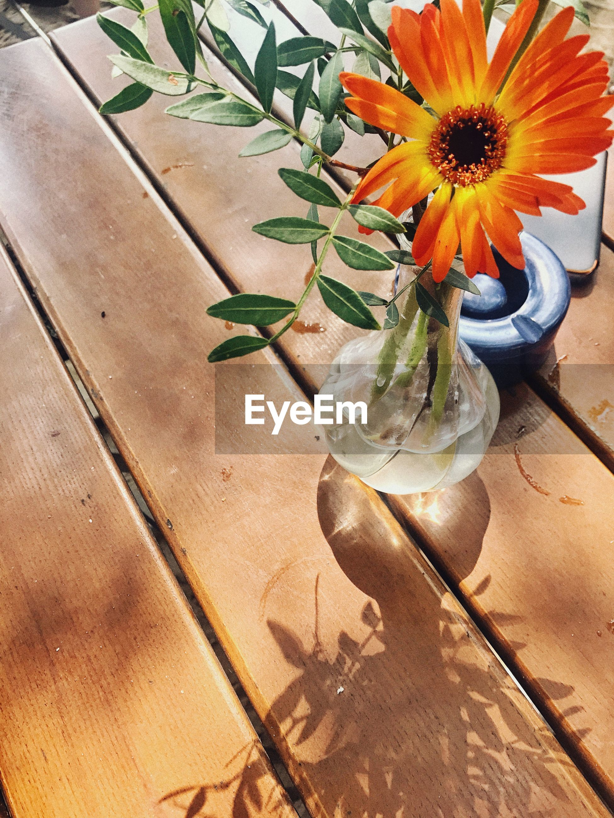 High angle view of flower vase on wooden table at home