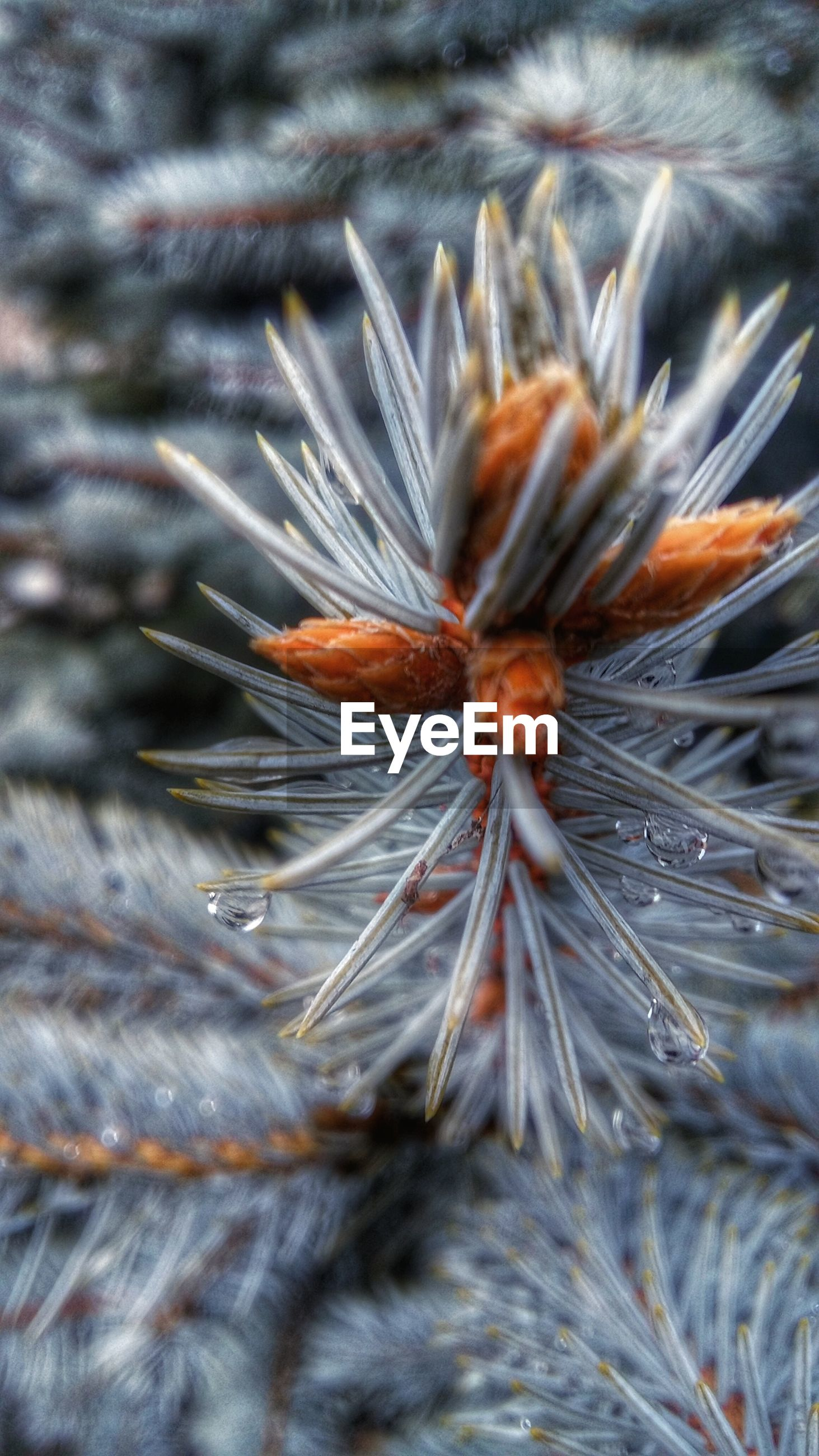 close-up, dry, nature, selective focus, fragility, focus on foreground, insect, outdoors, animal themes, one animal, natural pattern, no people, beauty in nature, day, animals in the wild, wildlife, plant, season, high angle view, dried plant