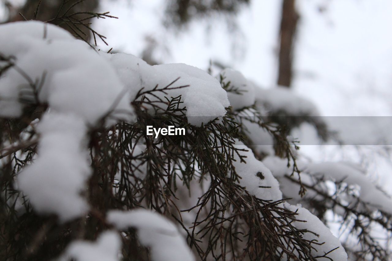 winter, snow, cold temperature, nature, white color, tree, weather, selective focus, beauty in nature, branch, outdoors, day, close-up, no people, sky