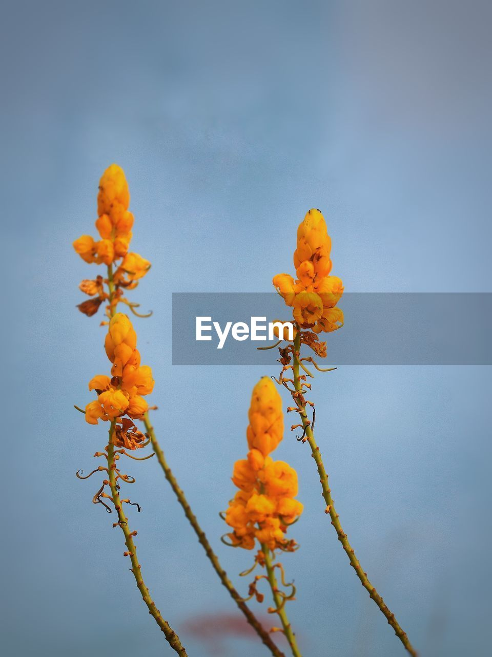 plant, growth, beauty in nature, flower, freshness, orange color, close-up, yellow, nature, no people, flowering plant, low angle view, day, sky, fragility, vulnerability, food, focus on foreground, outdoors, petal, flower head, orange, rowanberry