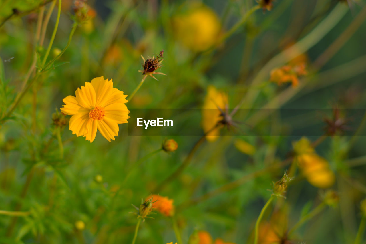 flower, flowering plant, plant, freshness, growth, fragility, beauty in nature, vulnerability, petal, flower head, invertebrate, close-up, insect, animal themes, one animal, animal, inflorescence, animals in the wild, yellow, bee, no people, pollination, outdoors, pollen, butterfly - insect