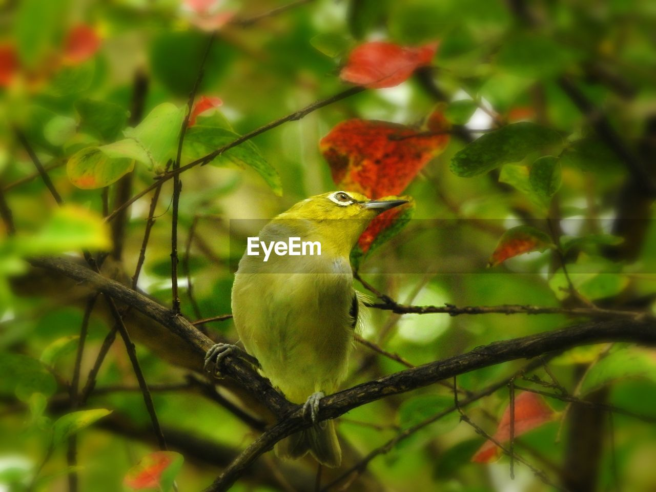 one animal, red, perching, bird, animals in the wild, animal themes, green color, animal wildlife, no people, branch, nature, day, outdoors, close-up, beauty in nature, tree, food