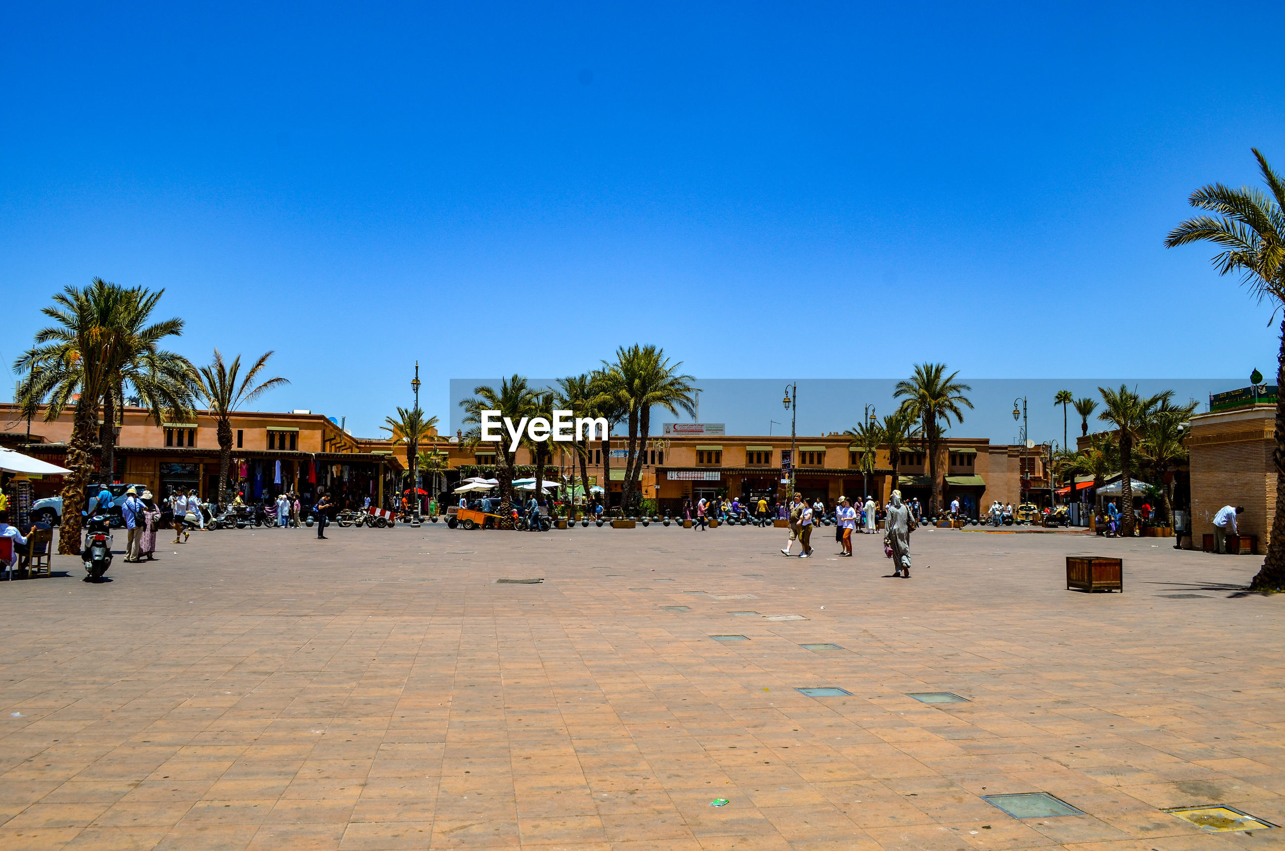 GROUP OF PEOPLE BY PALM TREES AGAINST BLUE SKY