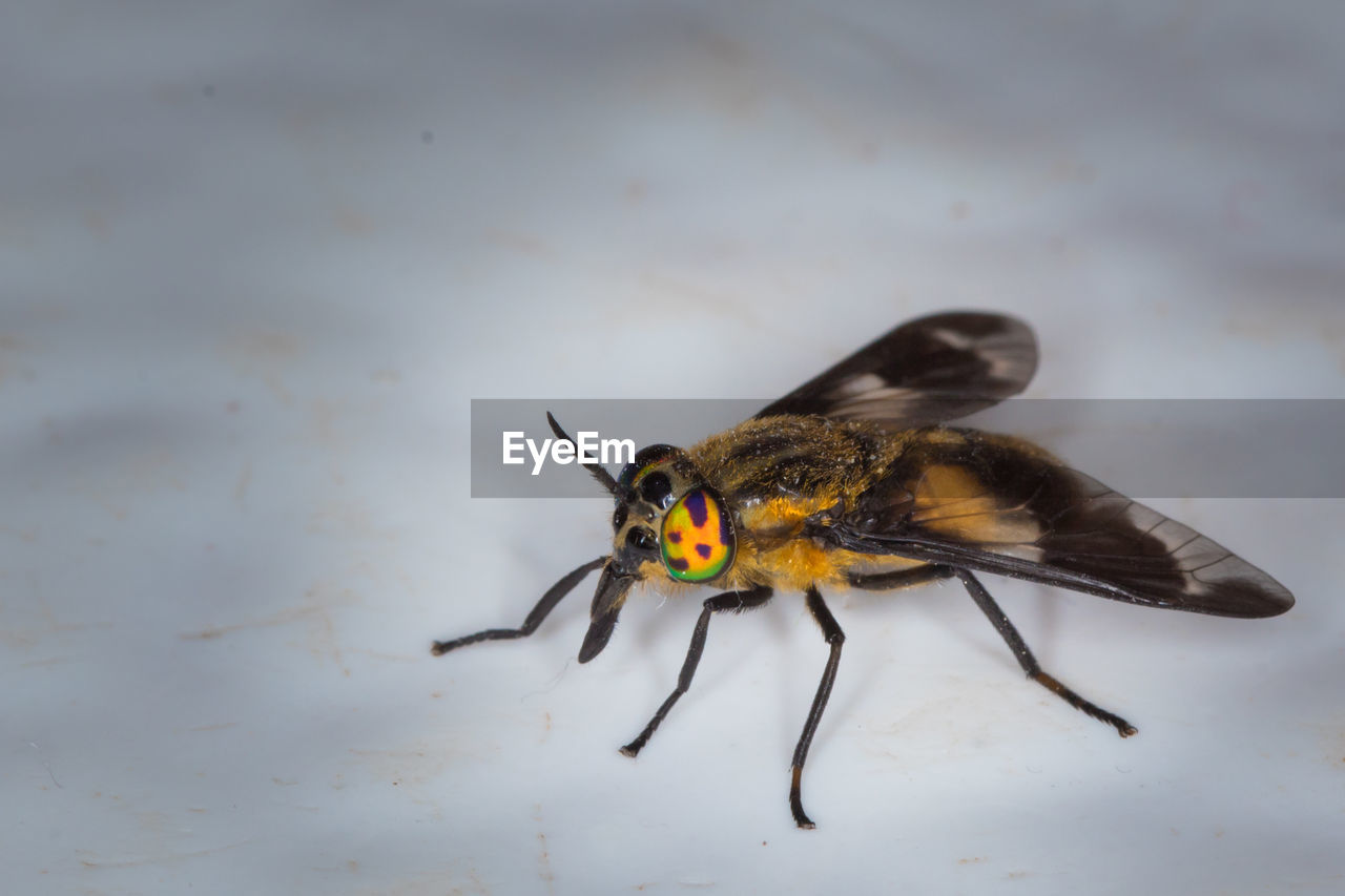 one animal, animals in the wild, insect, animal themes, animal wildlife, close-up, no people, day, outdoors, nature