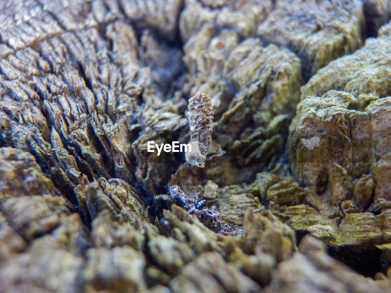 full frame, close-up, selective focus, backgrounds, no people, food and drink, food, indoors, textured, nature, healthcare and medicine, still life, extreme close-up, pattern, day, rock, invertebrate, animal wildlife, brown, marine