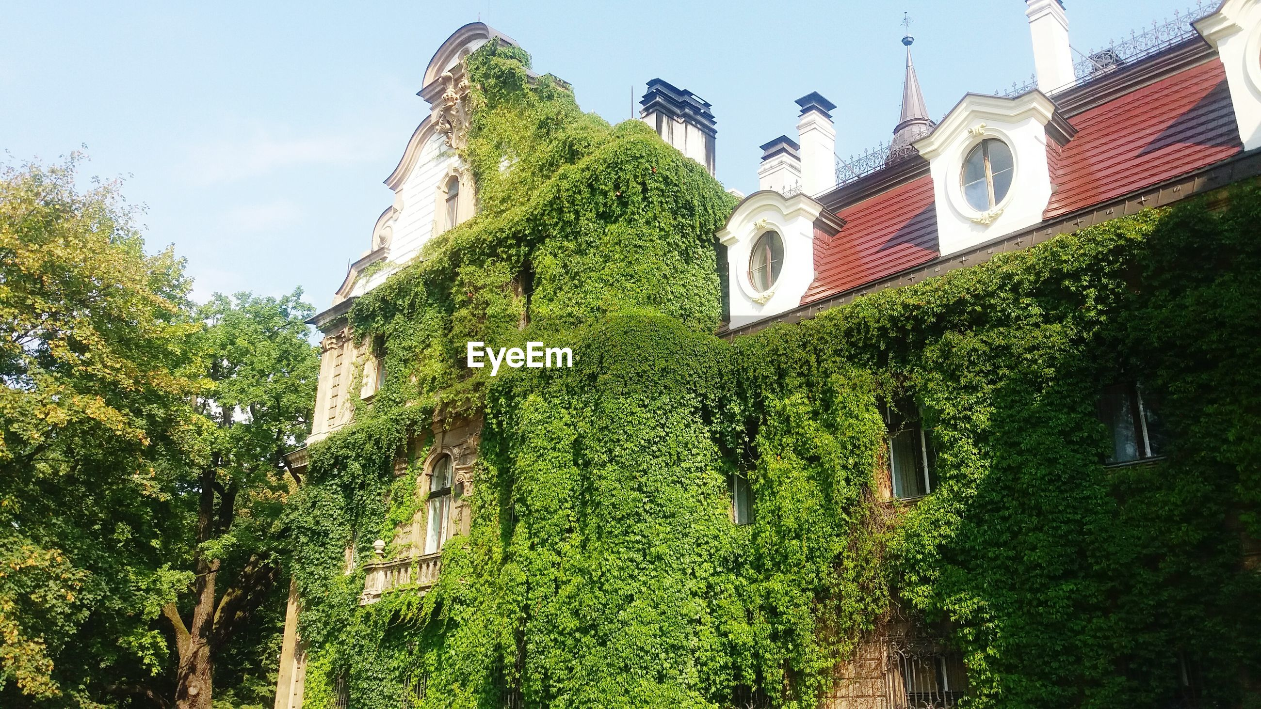 built structure, architecture, building exterior, growth, low angle view, green color, religion, ivy, house, church, residential building, creeper plant, residential structure, plant, creeper, sky, place of worship, lush foliage, outdoors, day, old town, freshness, green, stone, no people, overgrown, bell tower