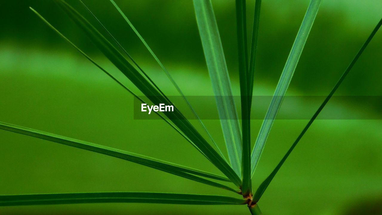 green color, plant part, leaf, close-up, growth, no people, plant, beauty in nature, focus on foreground, nature, day, freshness, outdoors, vulnerability, green, pattern, palm tree, grass, fragility, selective focus, palm leaf, blade of grass