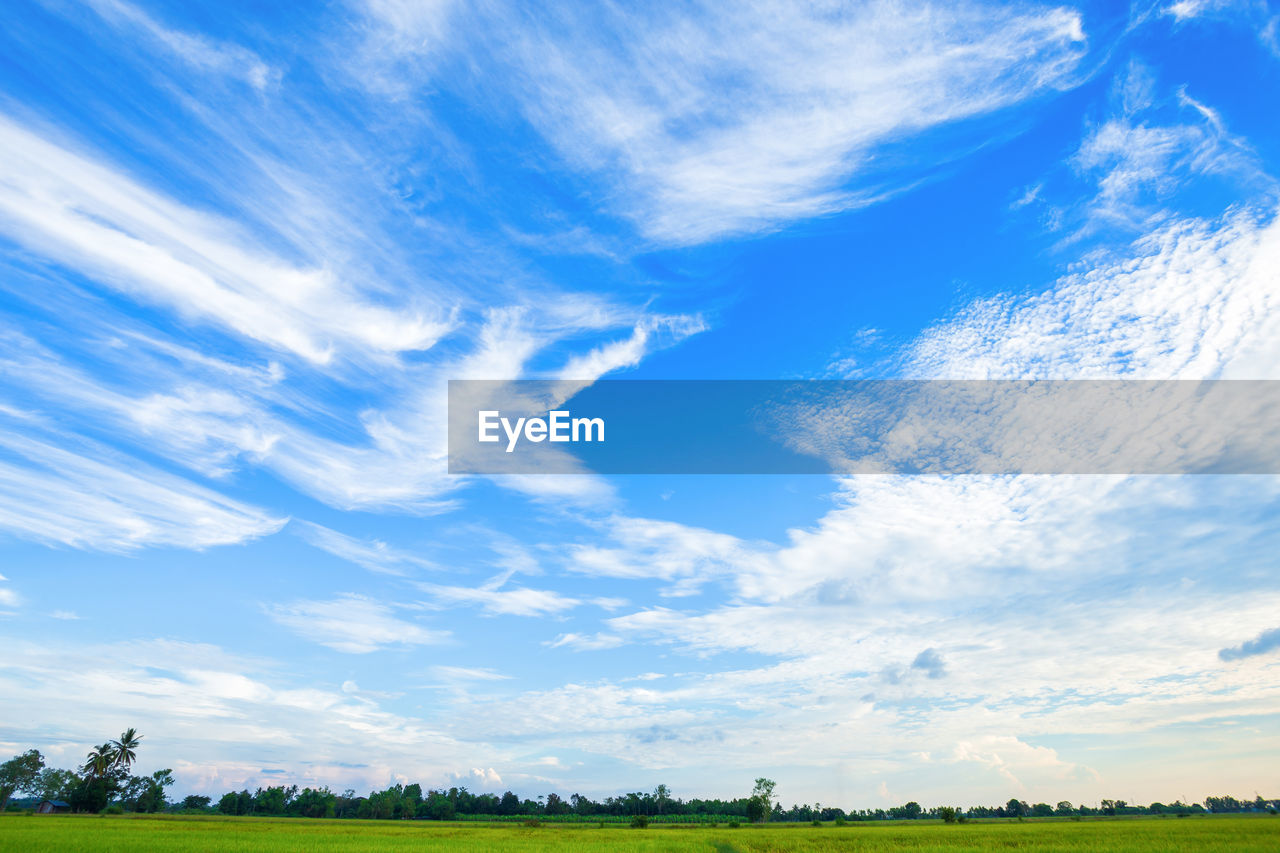 cloud - sky, sky, beauty in nature, scenics - nature, environment, landscape, tranquil scene, tranquility, nature, plant, field, day, blue, no people, land, grass, outdoors, non-urban scene, green color, tree