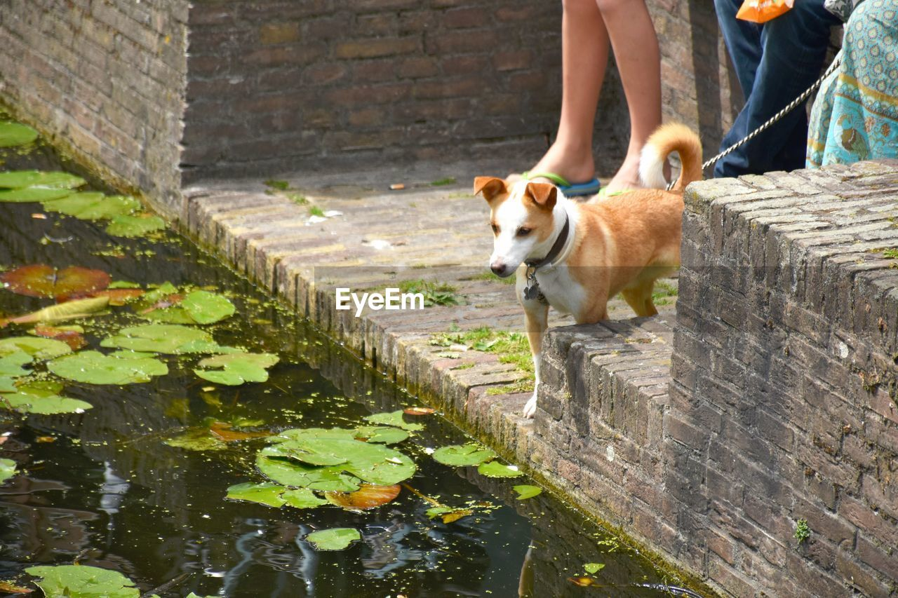 mammal, pets, one animal, domestic animals, domestic, dog, canine, vertebrate, water, low section, day, architecture, real people, one person, outdoors, nature, brick, pet owner