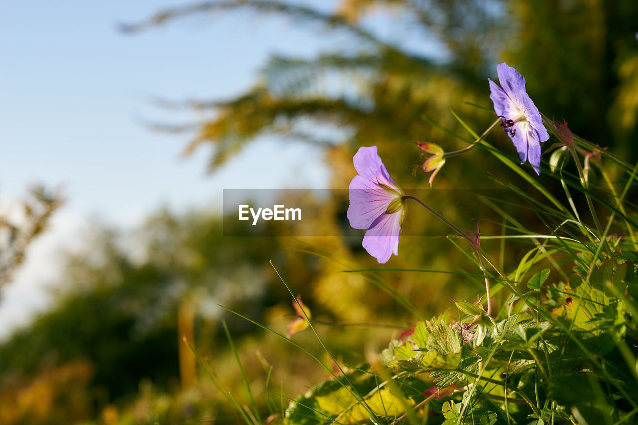 flower, beauty in nature, petal, fragility, nature, growth, flower head, plant, purple, freshness, focus on foreground, day, no people, outdoors, close-up, green color, blooming
