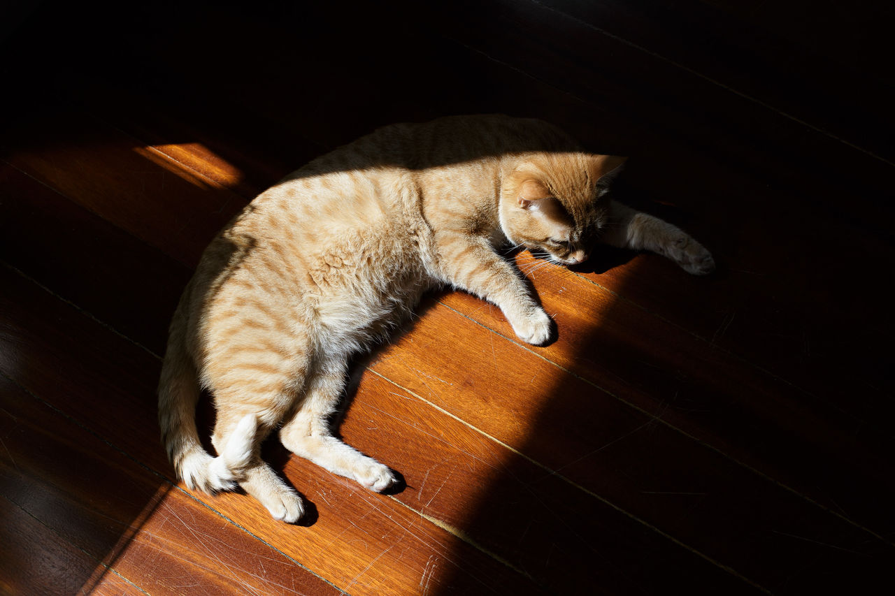 High Angle View Of Ginger Cat Relaxing On Floor At Home
