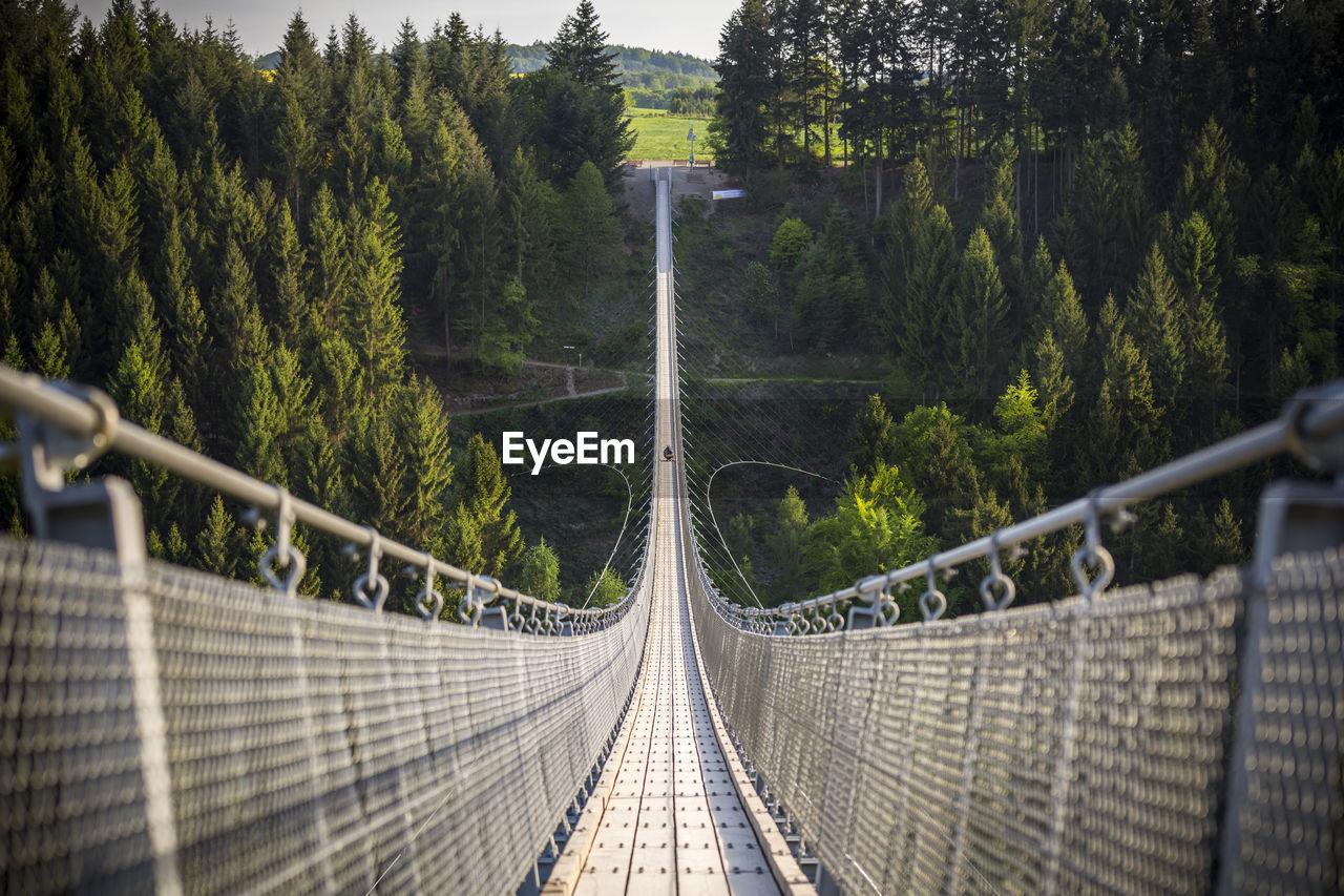Footbridge Over Trees