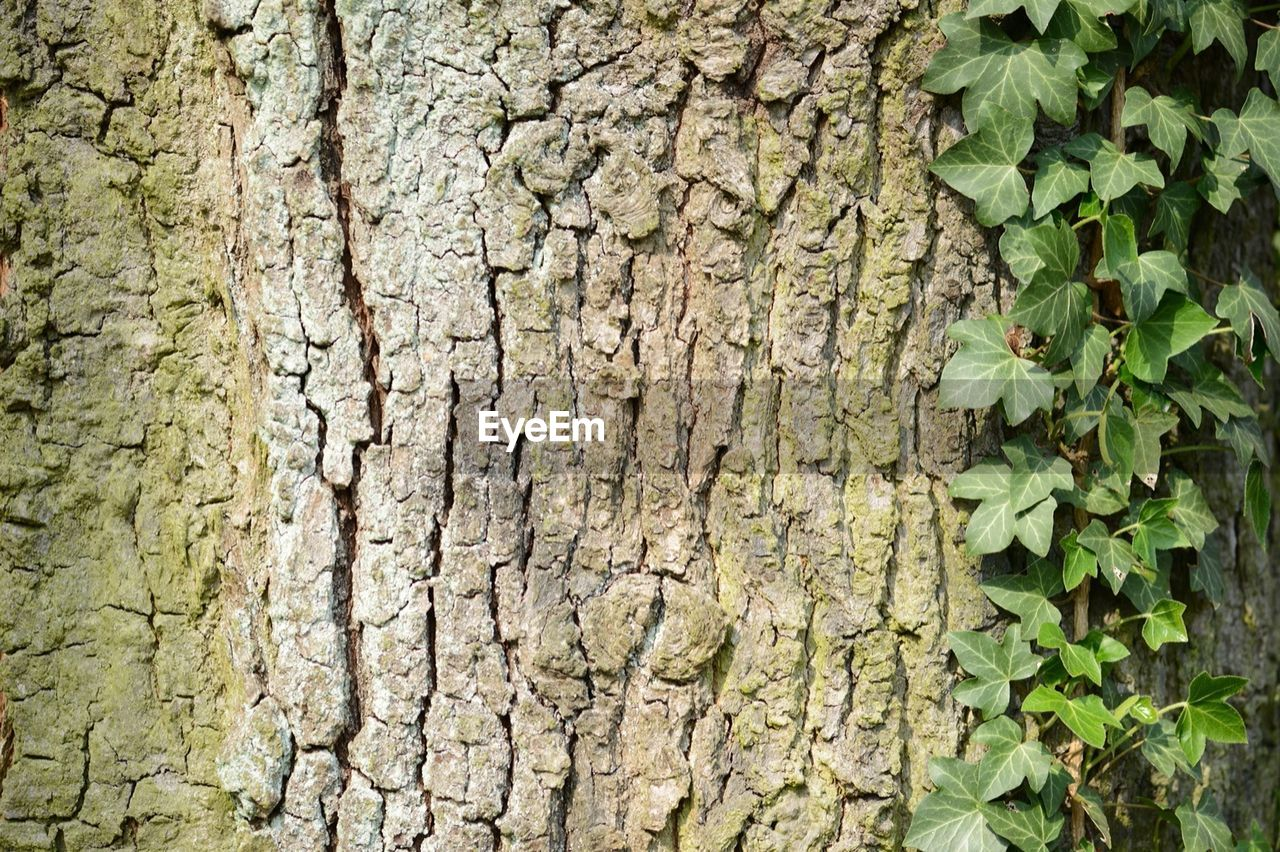 textured, tree trunk, close-up, cracked, rough, nature, plant, weathered, day, outdoors, tree, growth, no people, full frame