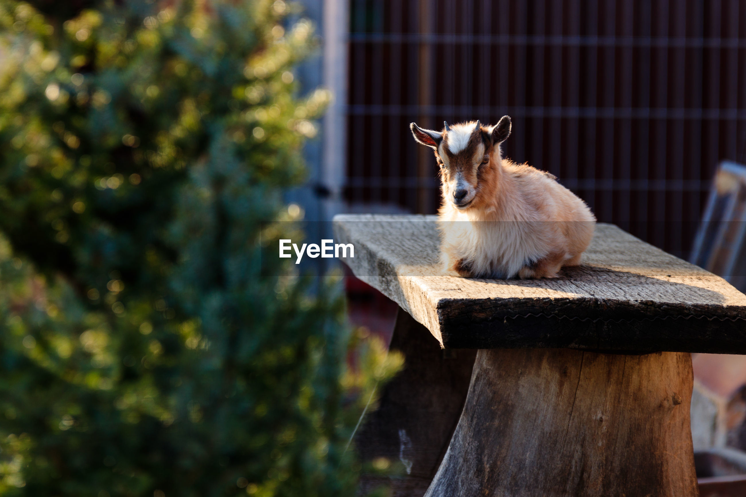 VIEW OF CAT SITTING ON WOOD AGAINST BLURRED BACKGROUND
