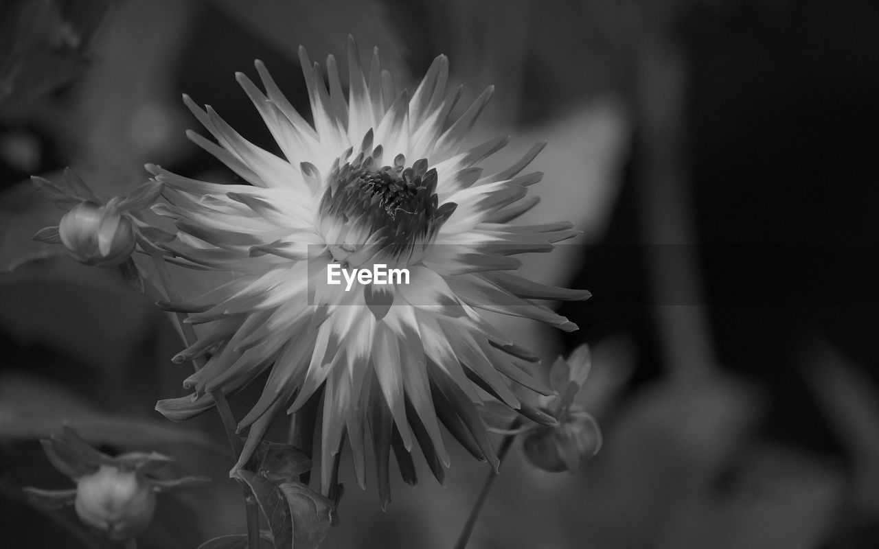 flower, flowering plant, fragility, vulnerability, plant, beauty in nature, petal, freshness, growth, flower head, inflorescence, close-up, focus on foreground, nature, pollen, no people, day, white color, selective focus