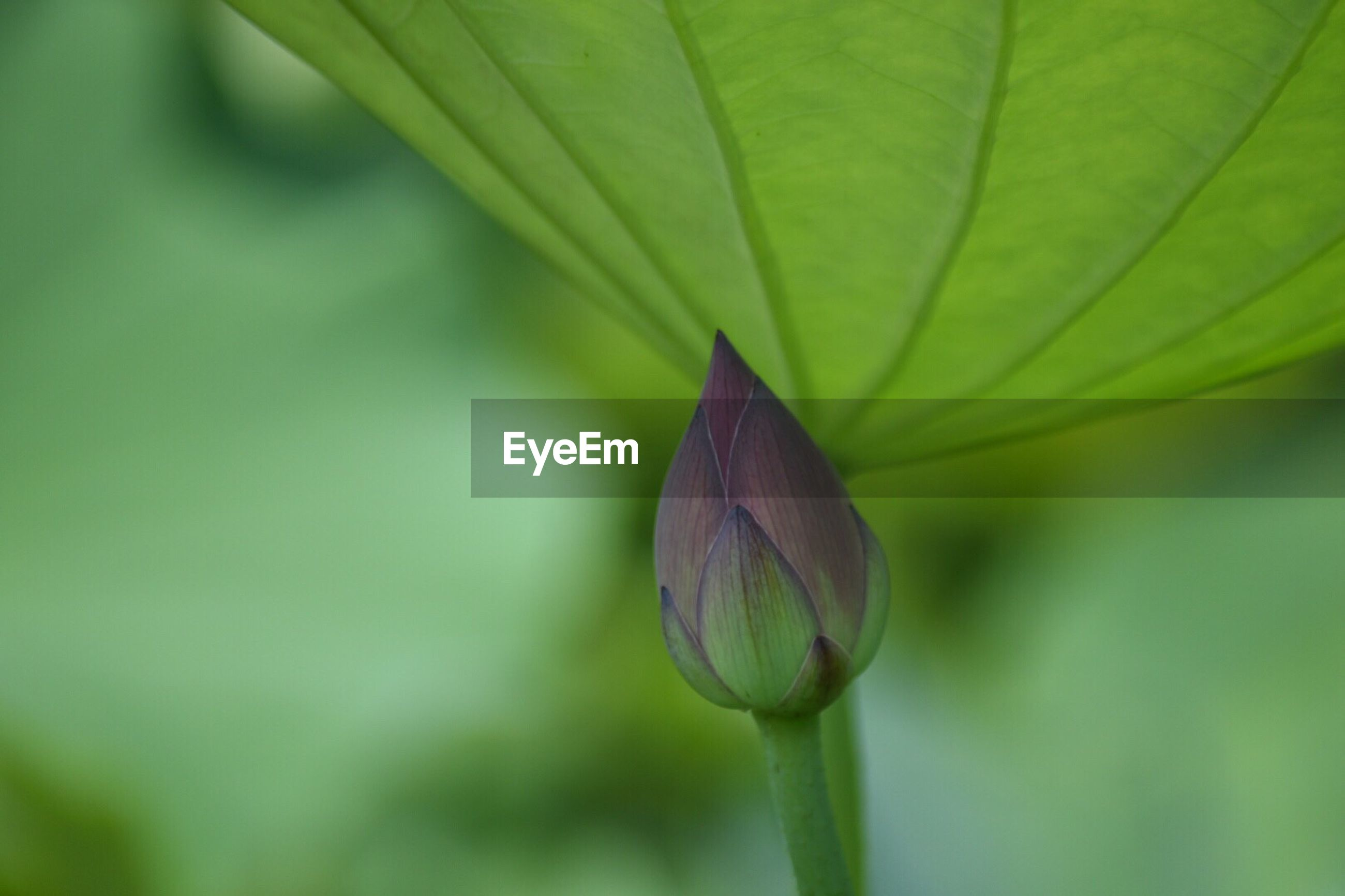 leaf, green color, nature, fragility, day, close-up, focus on foreground, plant, beauty in nature, outdoors, no people, growth, new life, freshness, animal themes, flower head