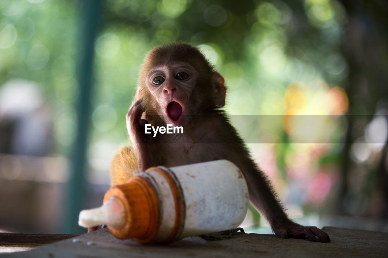 Monkey Sitting At Zoo