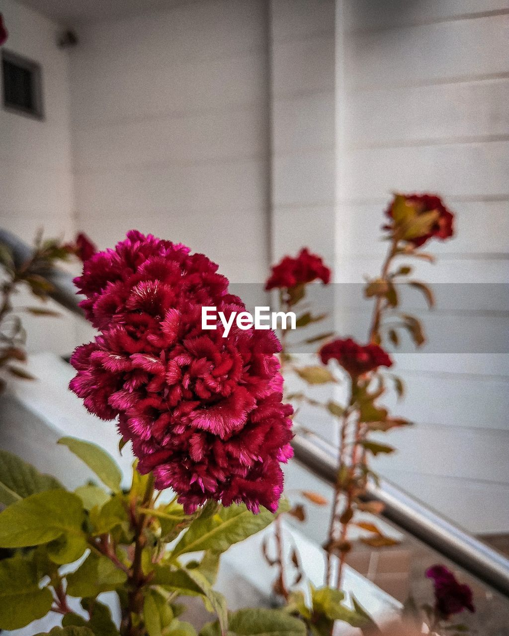 flowering plant, flower, plant, fragility, beauty in nature, vulnerability, freshness, growth, close-up, inflorescence, flower head, focus on foreground, no people, petal, nature, day, architecture, outdoors, red, pink color, flower arrangement, bunch of flowers