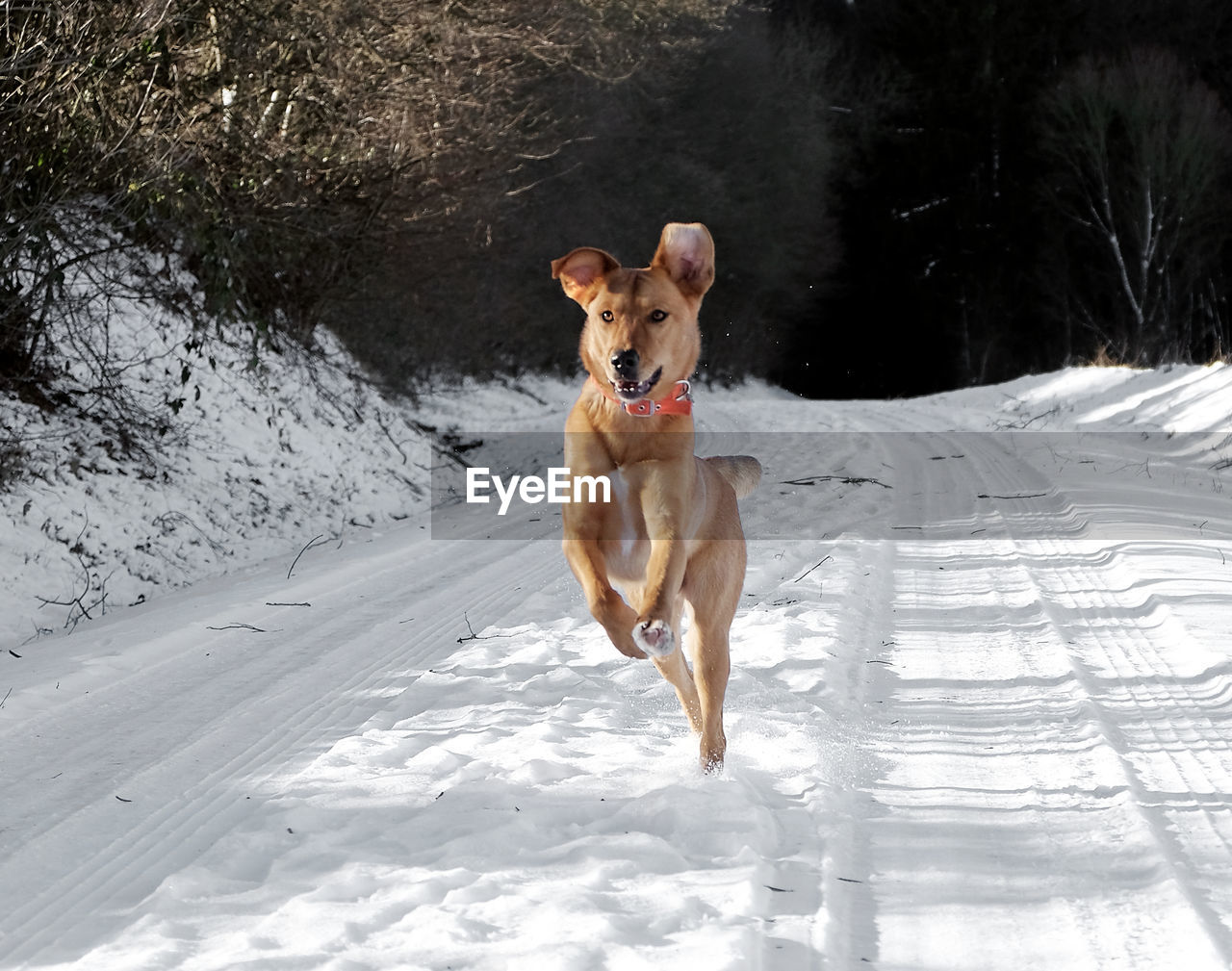 dog, pets, animal themes, domestic animals, mammal, one animal, snow, day, winter, nature, outdoors, no people
